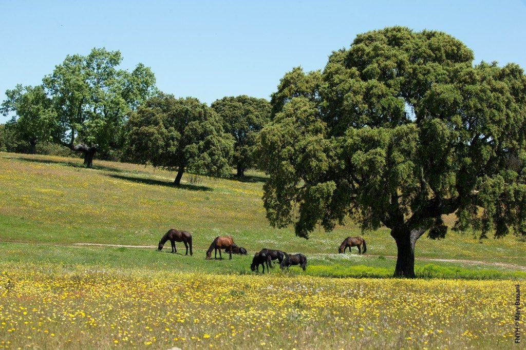 Reserva Biológica Campanarios de Azaba