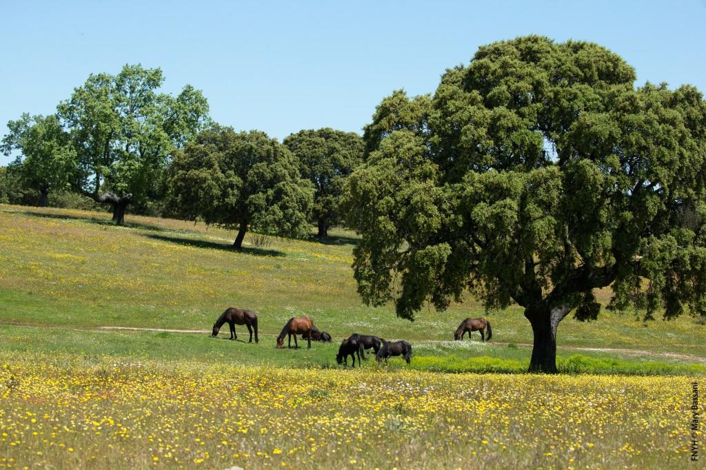 La Reserva Biológica Campanarios de Azaba, la primera reserva entomológica de España