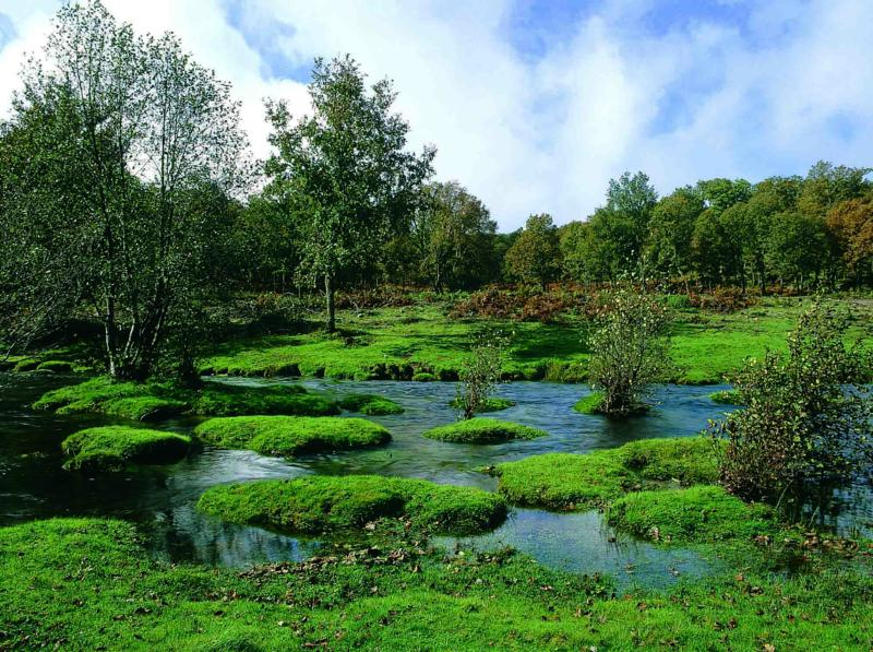 El Rebollar: la comarca que nació del bosque