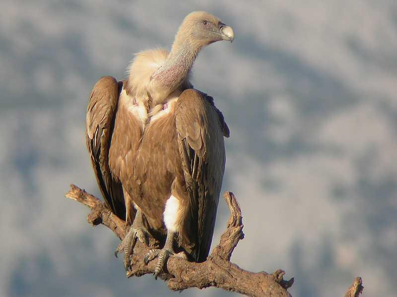 Los mejores lugares para la observación de aves en Salamanca