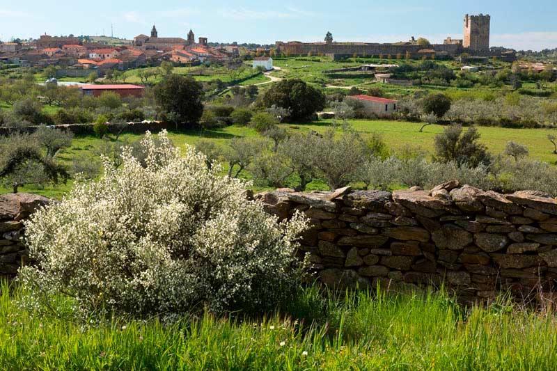 El Sendero del Aceite de San Felices de los Gallegos (Salamanca)