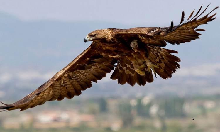 Las mejores rutas ornitológicas de Salamanca