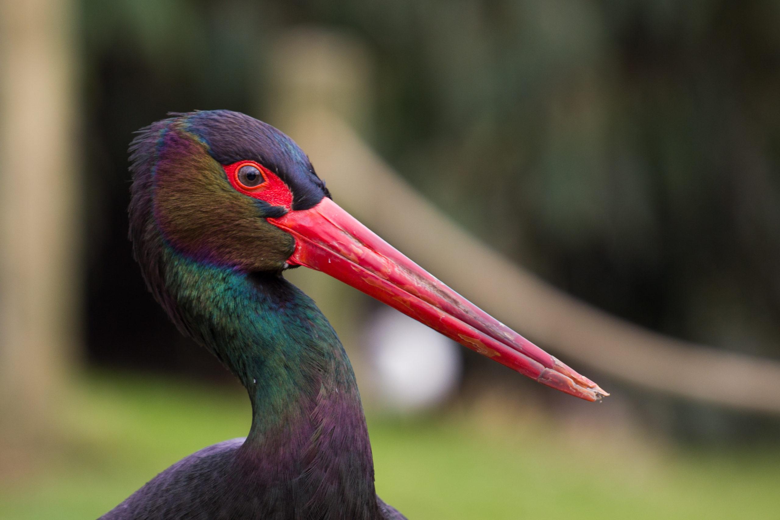 Las mejores rutas de observación de aves en Salamanca